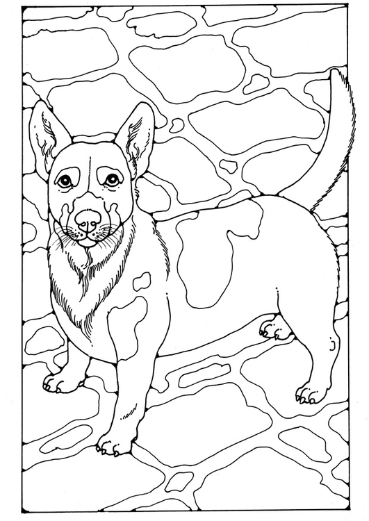 Malvorlage Jack Russel | Ausmalbild 28213.