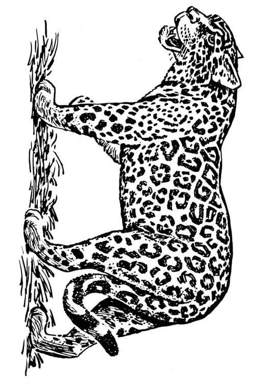 Malvorlage Jaguar Ausmalbild 16636 Images