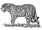 Malvorlage  Jaguar