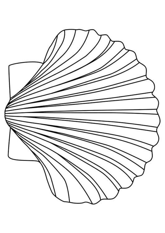 Malvorlage jakobsmuschel ausmalbild 27179 - Coquille saint jacques dessin ...