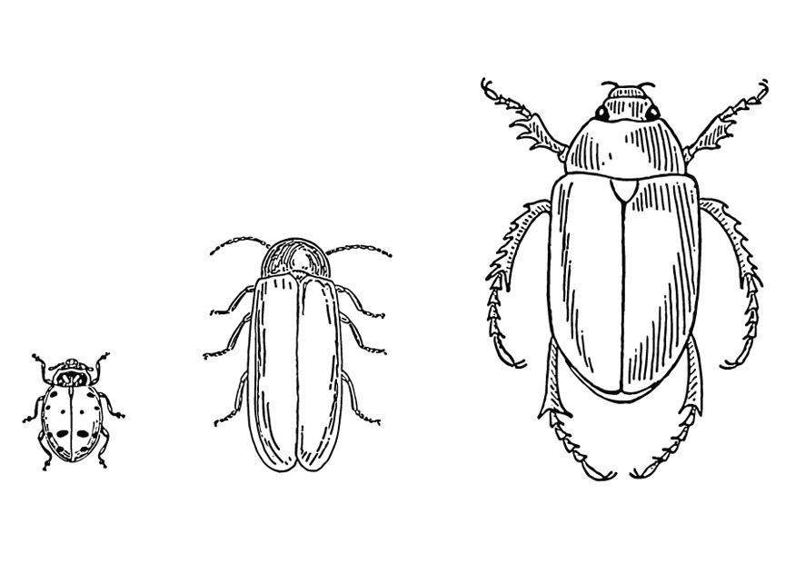 Malvorlage Käfer | Ausmalbild 13267.