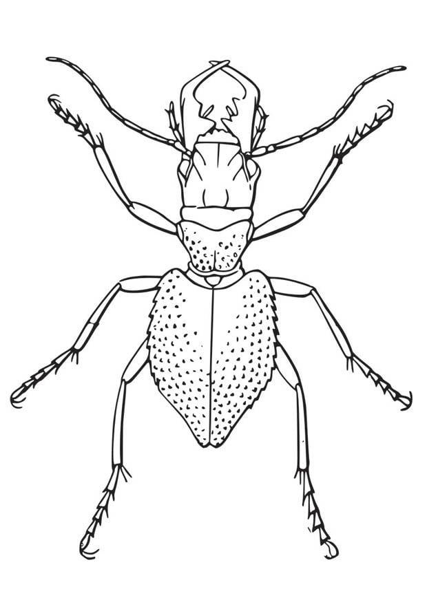 malvorlage käfer  kostenlose ausmalbilder zum ausdrucken