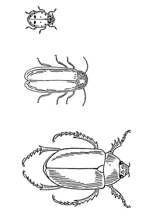 Großzügig Insekten Und Käfer Malvorlagen Fotos ...