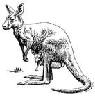Malvorlage  Känguruh