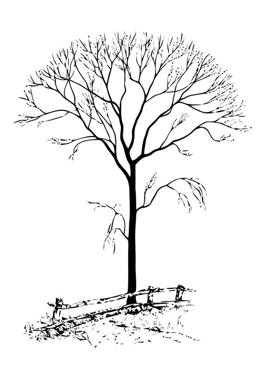 Malvorlage kahler Baum   Ausmalbild 11331.