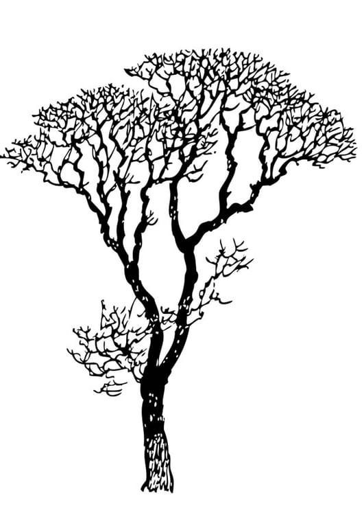 Malvorlage kahler Baum | Ausmalbild 17318.