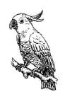 Malvorlage  Kakadu