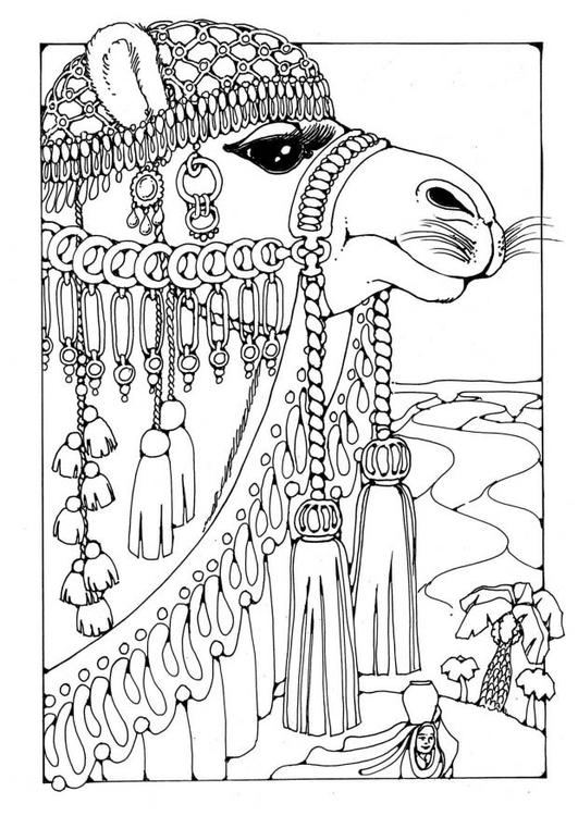 Malvorlage Kamel | Ausmalbild 19598.