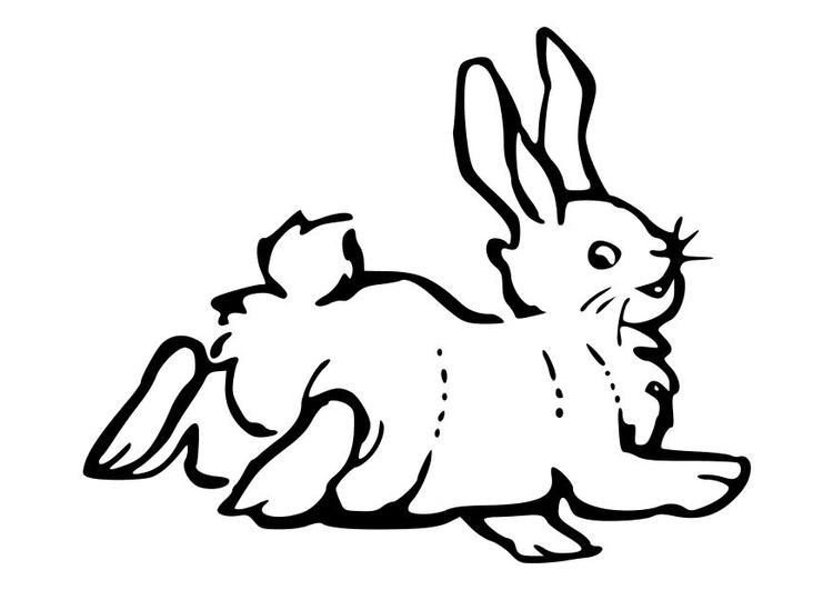 malvorlage kaninchen  kostenlose ausmalbilder zum