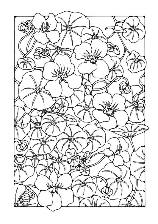 malvorlage kapuzinerkresse  ausmalbild 27759