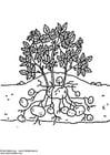 Malvorlage  Kartoffelpflanze