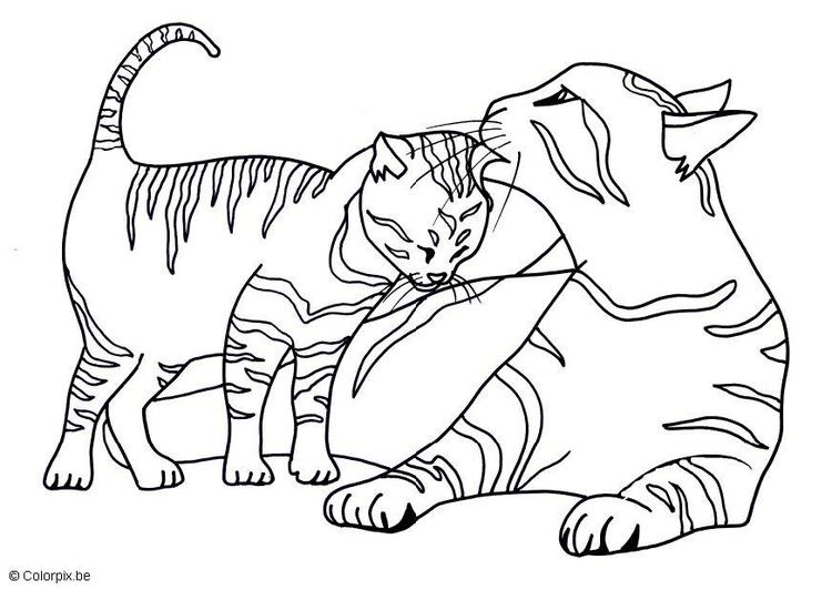 Malvorlage Katzen | Ausmalbild 11591.