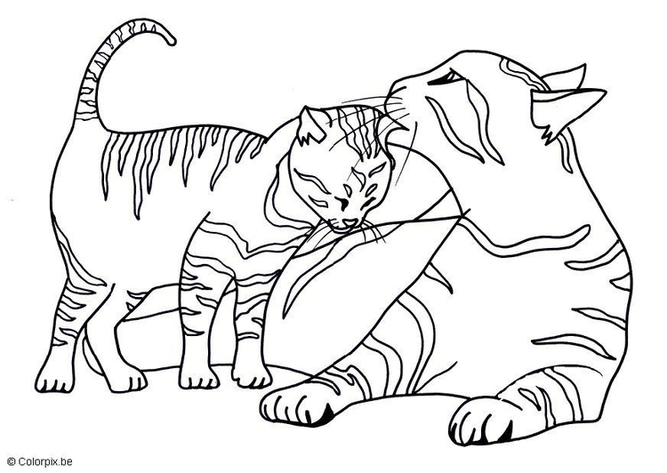 Malvorlage Katzen | Ausmalbild 17439.