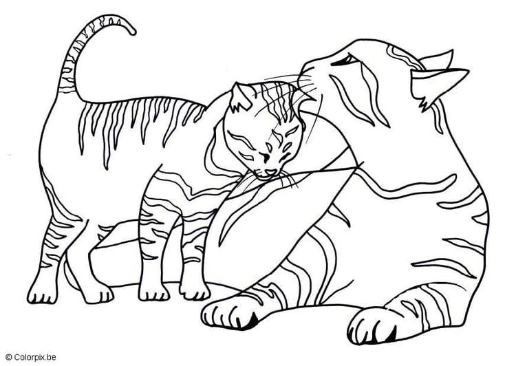 Malvorlage Katzen Kostenlose Ausmalbilder Zum Ausdrucken