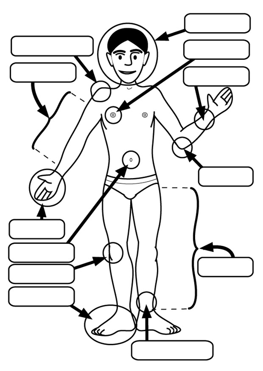 Malvorlage Körperteile   Ausmalbild 26927.
