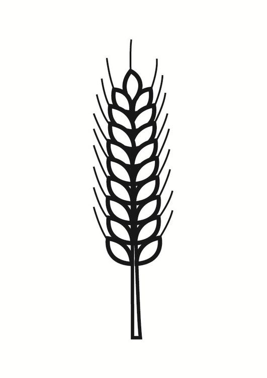 malvorlage korn  kostenlose ausmalbilder zum ausdrucken