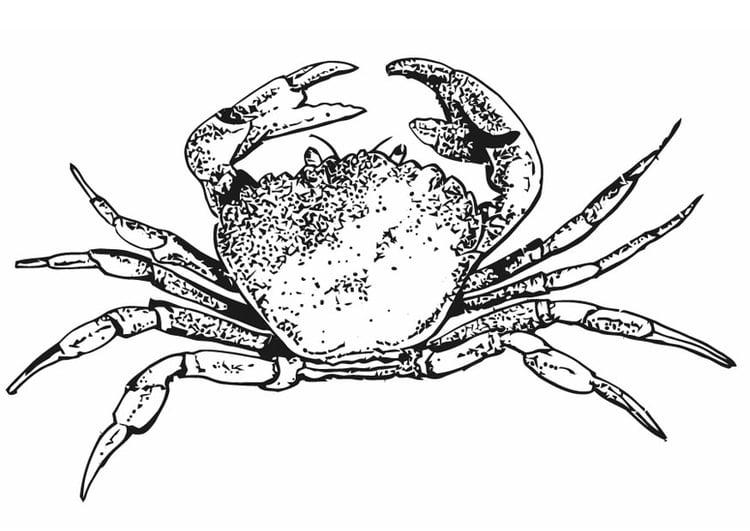 Großzügig Blaue Krabbe Malvorlagen Bilder - Dokumentationsvorlage ...
