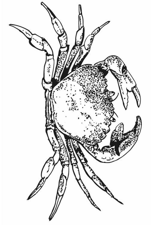 Malvorlage Krabbe | Ausmalbild 16618.