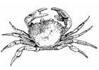 Malvorlage  Krabbe