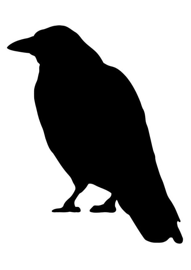 malvorlage krähe  kostenlose ausmalbilder zum ausdrucken