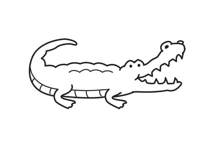 malvorlage krokodil  kostenlose ausmalbilder zum