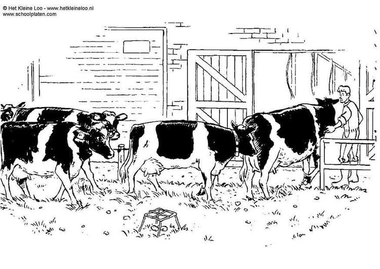 Malvorlage Kühe Ausmalbild 3805