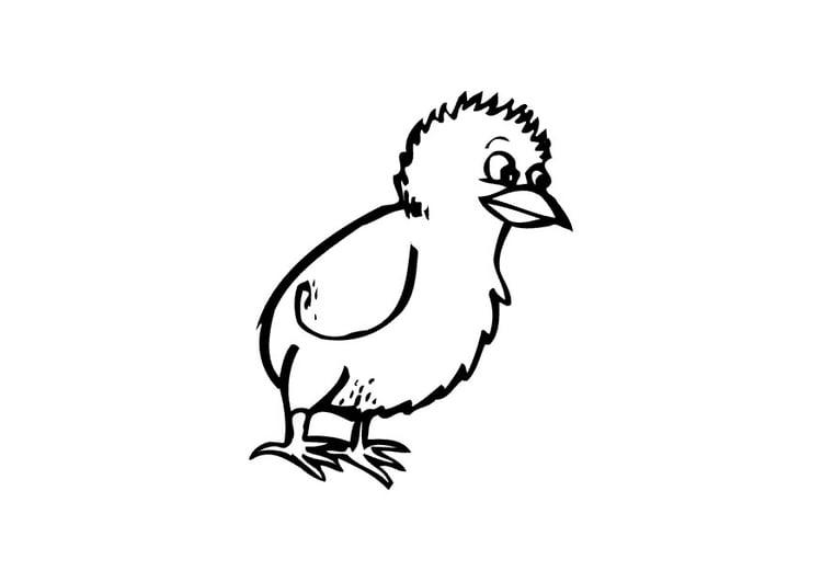 Kippen En Kuikens Kleurplaten Malvorlage K 252 Ken Ausmalbild 10431