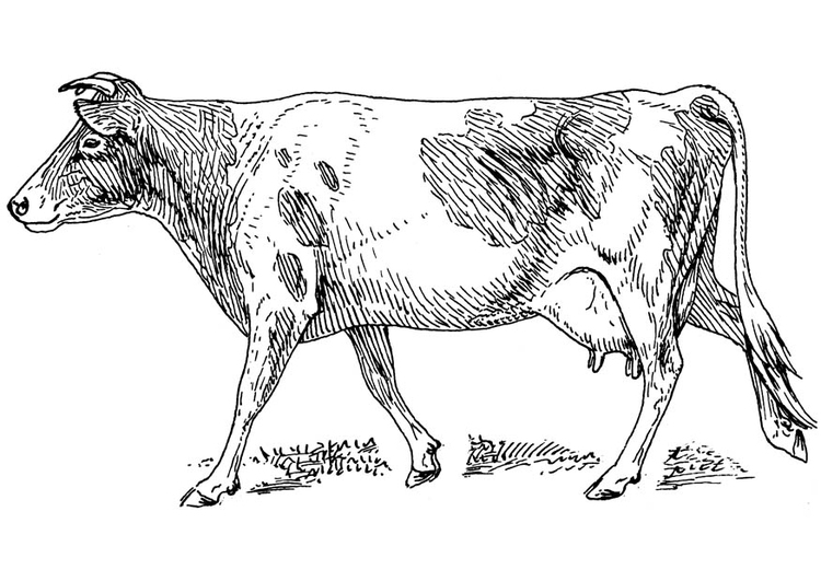 Malvorlage Kuh | Ausmalbild 16623.