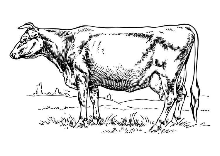 Malvorlage Kuh | Ausmalbild 17319.