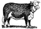 Malvorlage  Kuh - Hereford