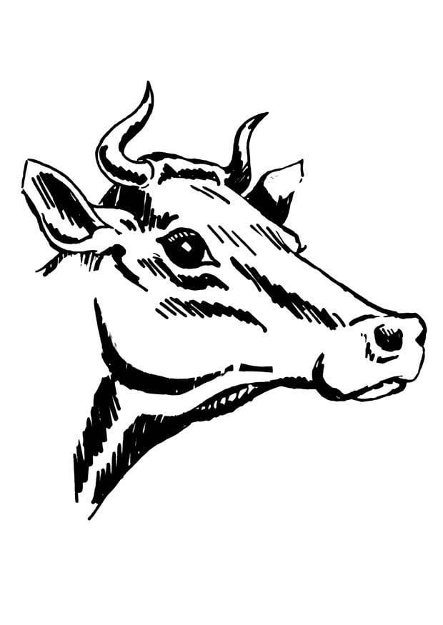 malvorlage kuh mit hörnern  kostenlose ausmalbilder zum