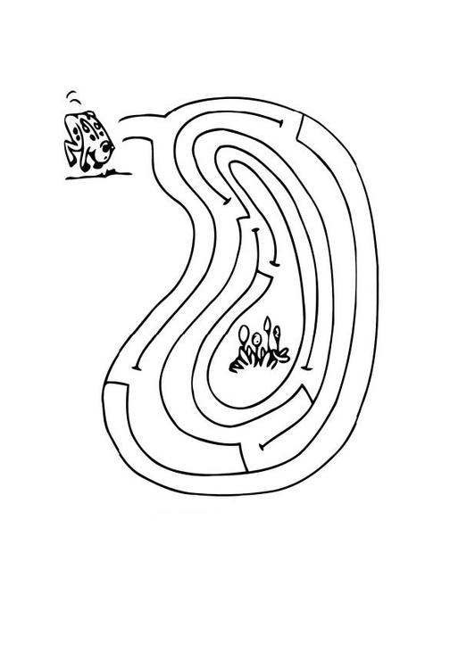 malvorlage labyrinth frosch  kostenlose ausmalbilder zum