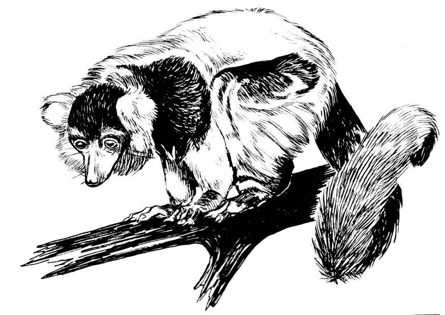 Lemur Kreuzworträtsel