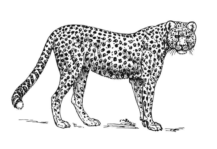 leopard ausmalbilder zum ausdrucken | kinder ausmalbilder