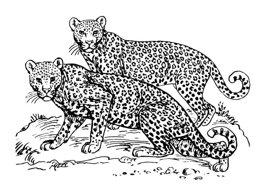 Malvorlage leopard ausmalbild 16631 - Jaguar dessin ...