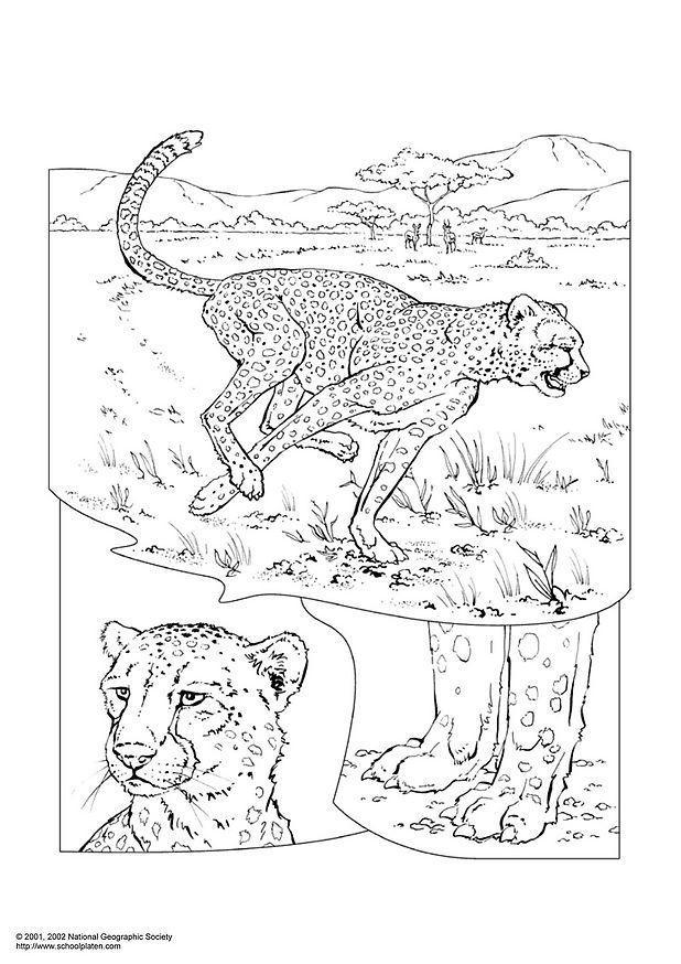 Paarden Kleurplaate Malvorlage Leopard Kostenlose Ausmalbilder Zum Ausdrucken