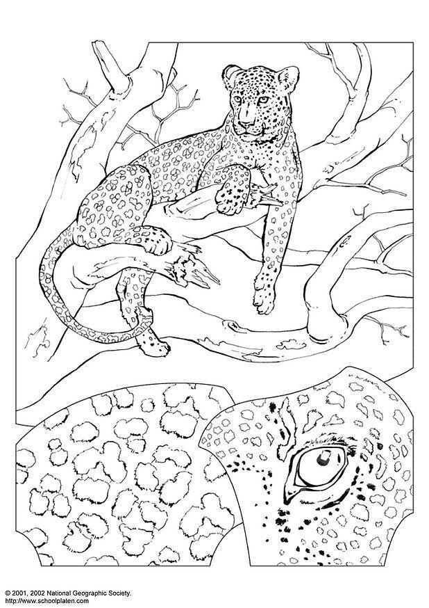 Malvorlage Leopard Ausmalbild 3069 Images