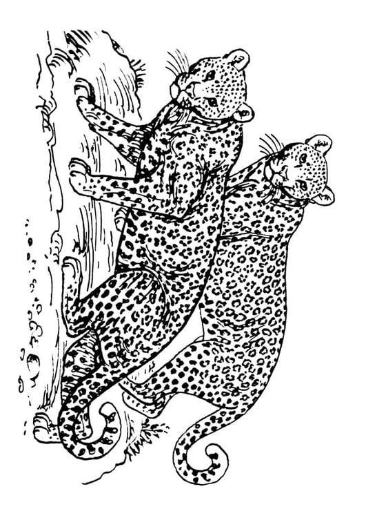 Malvorlage Leopard Ausmalbild 16631