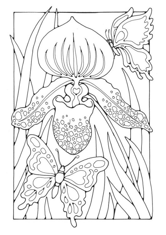 malvorlage lilie mit schmetterlingen  kostenlose