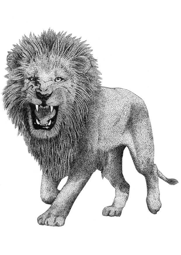 malvorlage löwe  ausmalbild 9394