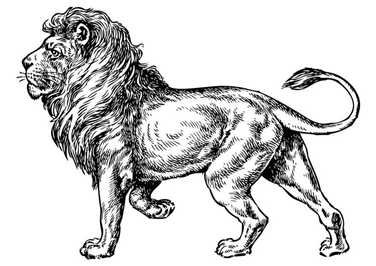 Malvorlage Löwe Ausmalbild 17373