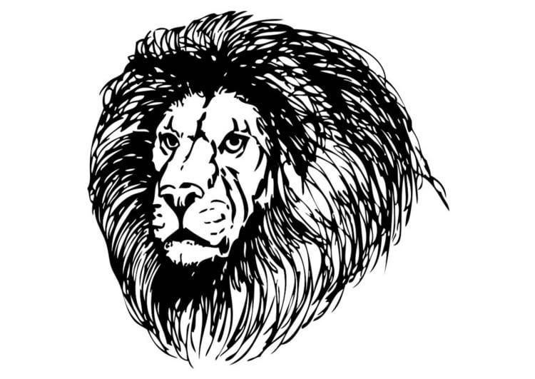 malvorlage löwe - kostenlose ausmalbilder zum ausdrucken.