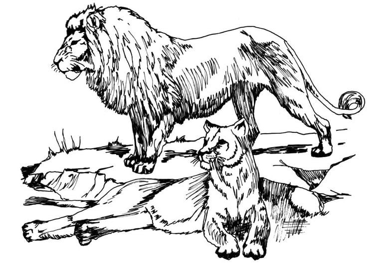 Line Art Jungle Animals : Malvorlage löwe und löwin ausmalbild