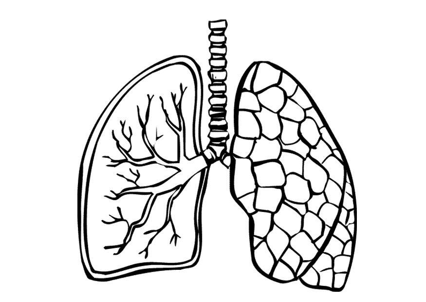 malvorlage lungen