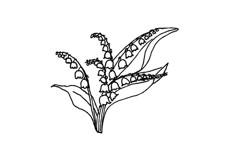 malvorlage maiglöckchen  kostenlose ausmalbilder zum