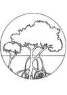 Malvorlage  Mangrovenbäume