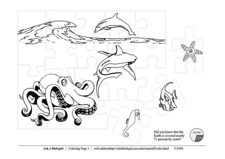 Malvorlage Meerestiere | Ausmalbild 3639.