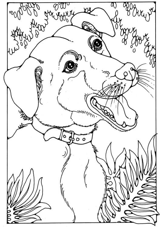 Malvorlage Mischlingshund Ausmalbild 28200