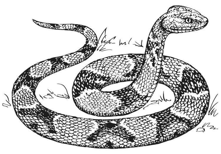 malvorlage kobra schlange  coloring and malvorlagan