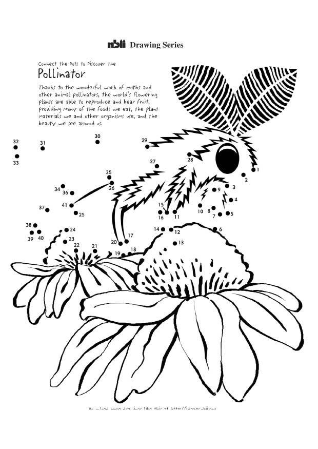 Malvorlage Motte | Ausmalbild 11389.
